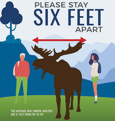 Please Stay Six Feet Apart - The average bull moose antlers are six feet from tip to tip.